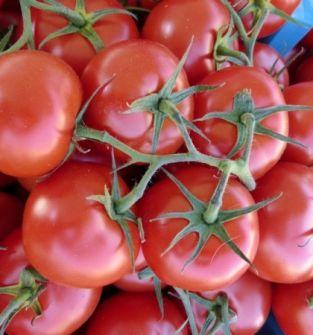 Pomidory z tradycyjnej uprawy