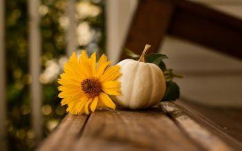 Dynia jesienna