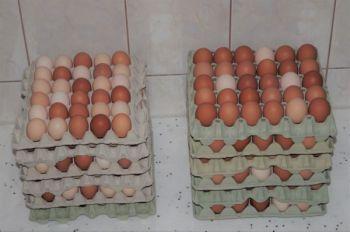Jaja z własnego gospodarstwa
