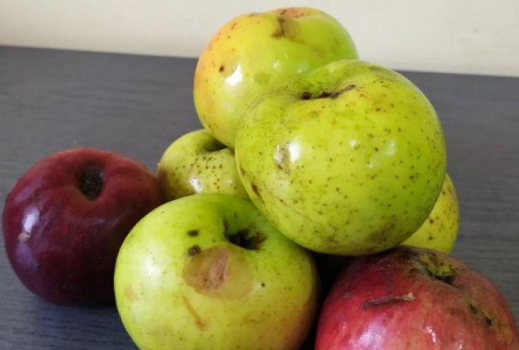 Jabłka  stare tradycyjne odmiany
